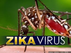 zikavirus7